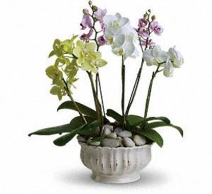 """Picture of A-023  """"Garden of orchids"""""""