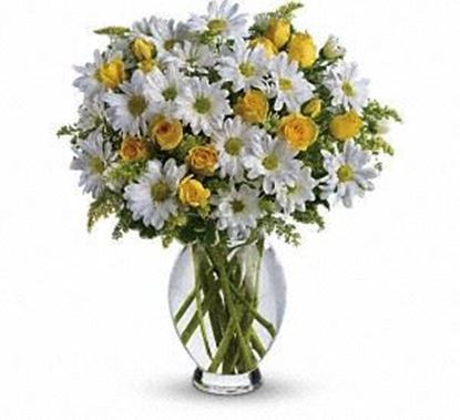 """Picture of GW-010 """"Amazing Daisy """""""