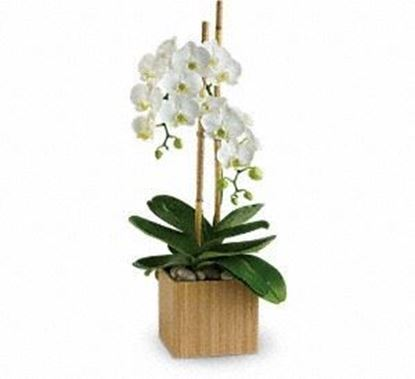 """Picture of GW-014 """"White Orchid """""""