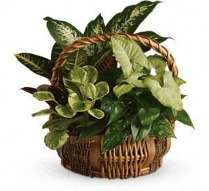 "Picture of P-006 ""Emerald  Garden Basket """